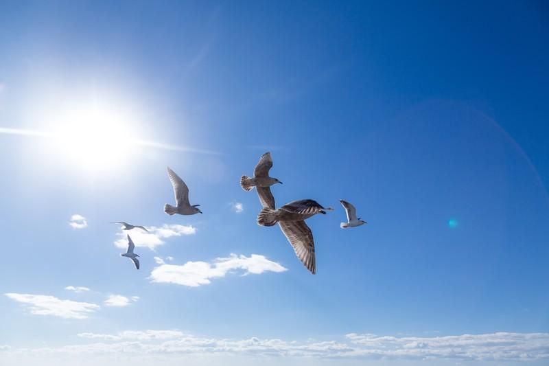 【シナリオブログ】空の向こう側