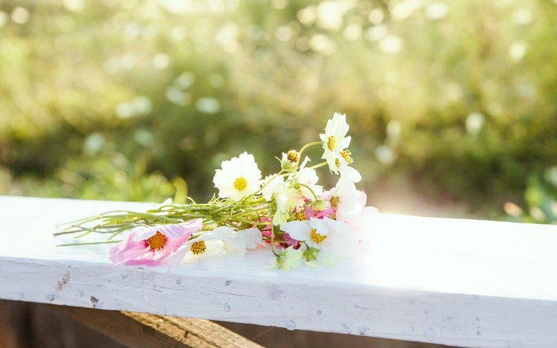 【シナリオ】四月一日の花嫁