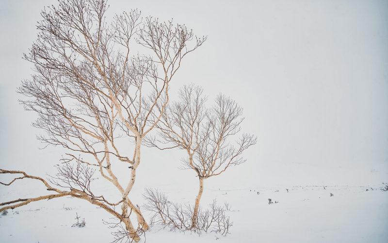 【声劇台本】冬の訪れ